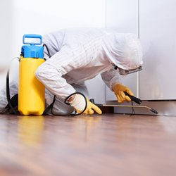 Pest Removal Treatment