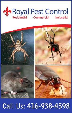Contact Royal Pest Control