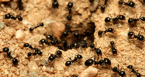 Ant Control & Removal
