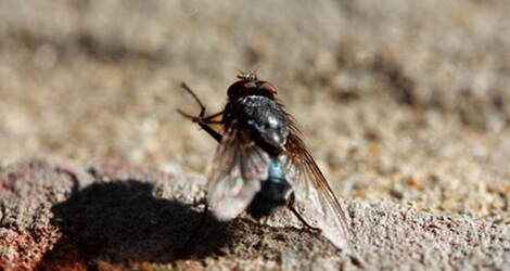 Flies Control & Removal