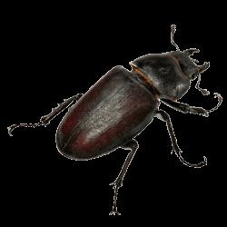 Beetle-Control