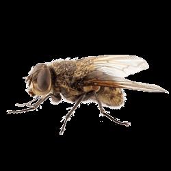 Flies-Control